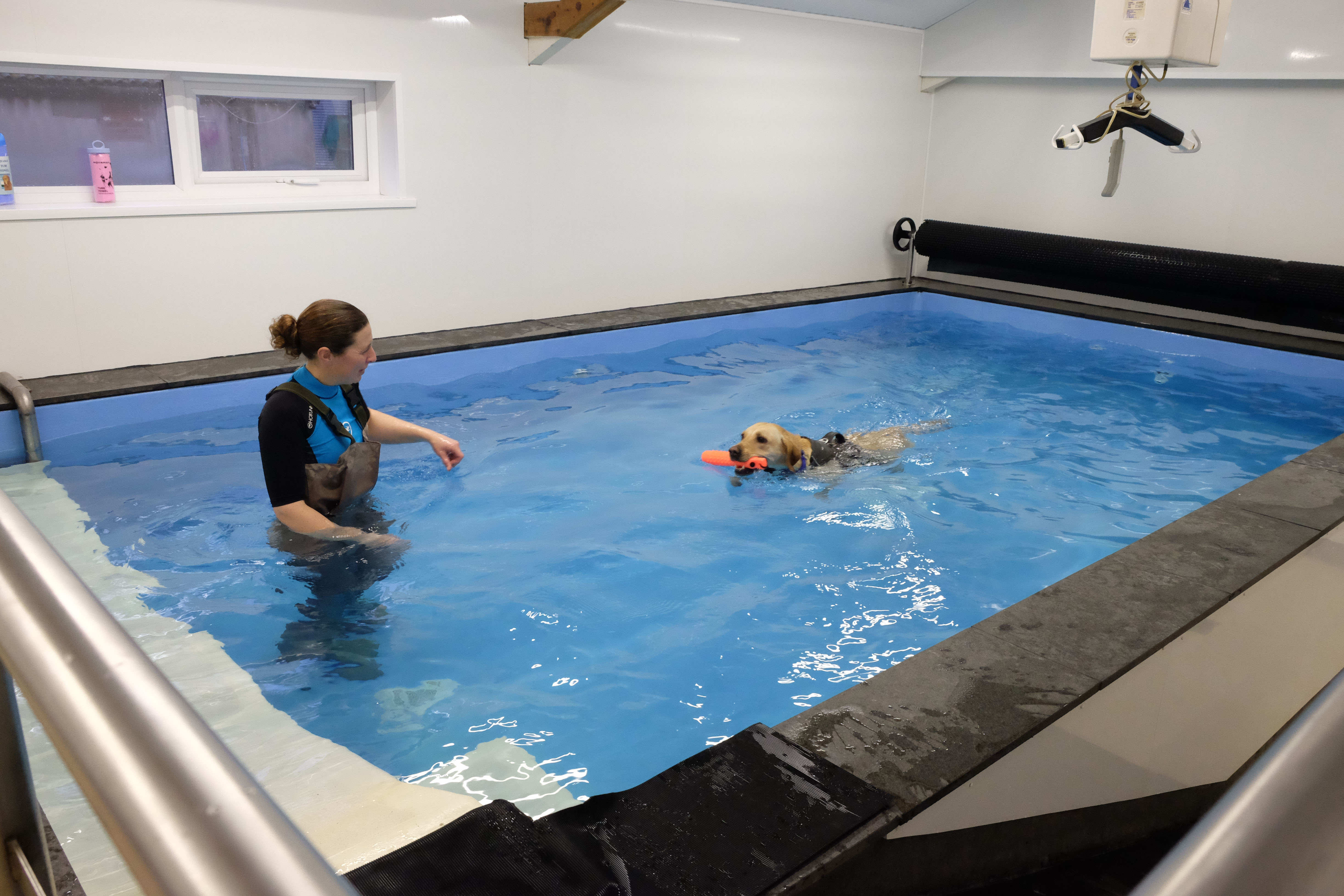 Dog Swimming Pool   Canine Hydrotherapy Pools   Asher Swimpool Centre