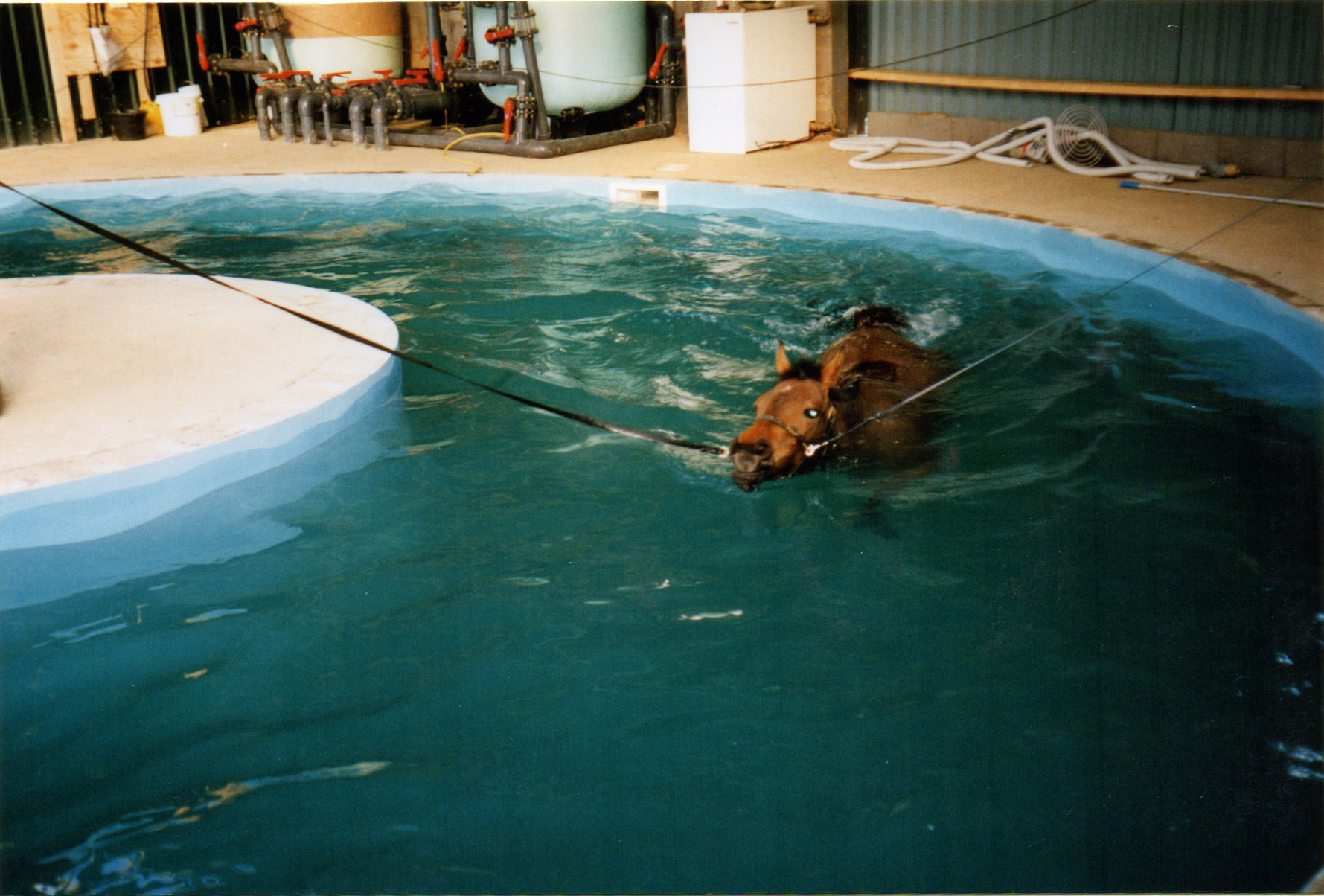 Horse swimming pool equine hydrotherapy asher swimpool for Show pool horse racing